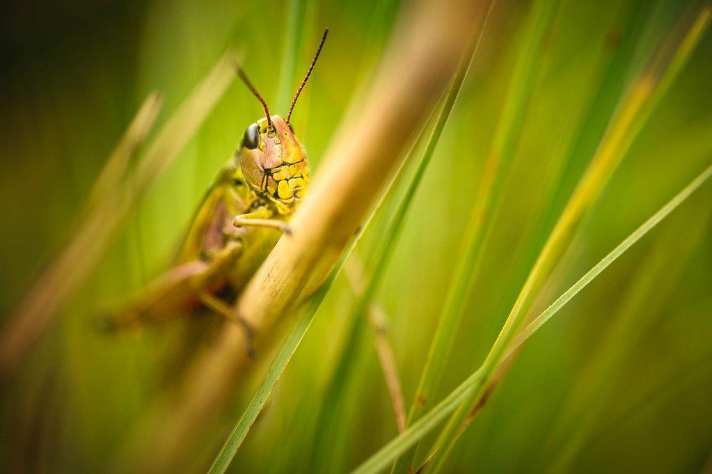 fauna-flora-140801-0001.jpg