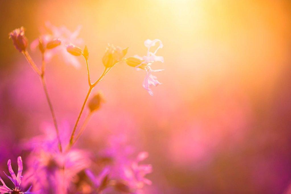 fauna-flora-150602-0004.jpg