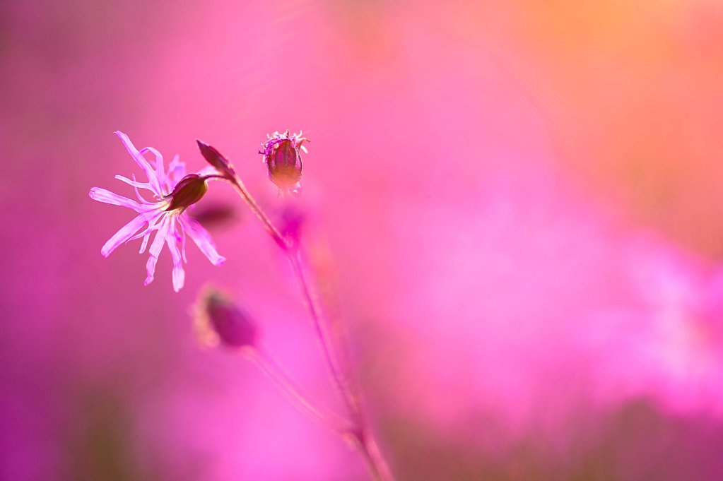 fauna-flora-150602-0005.jpg