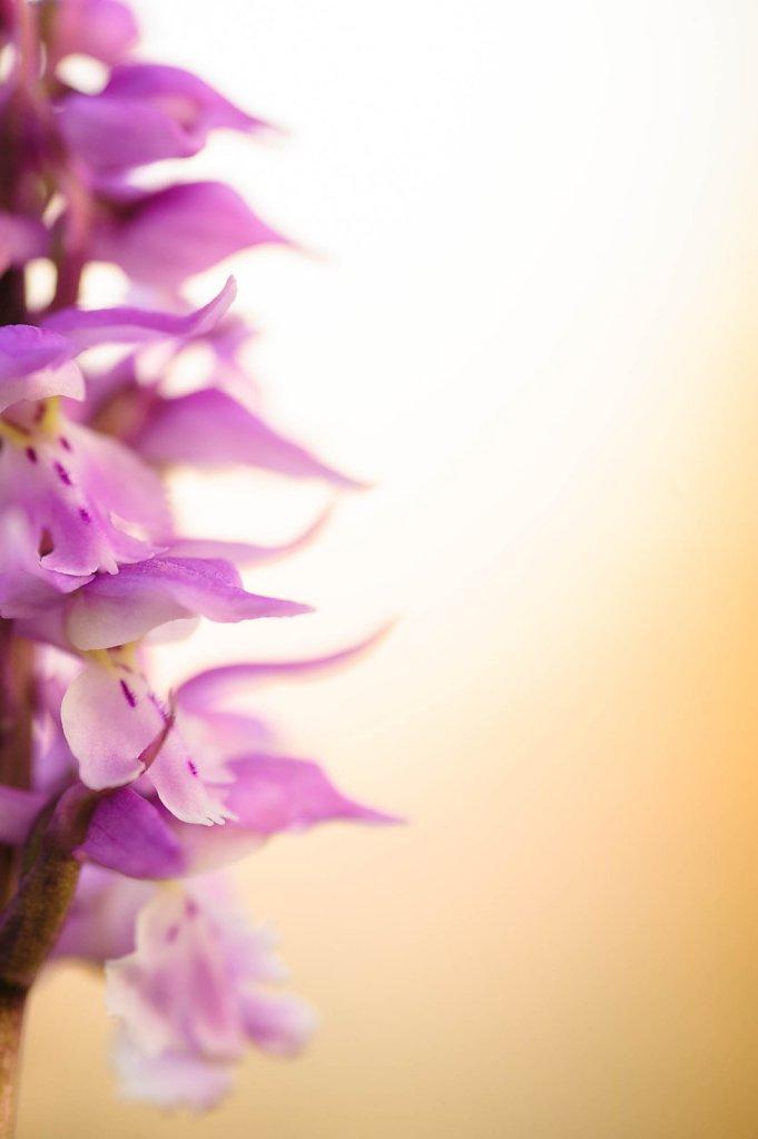 fauna-flora-150604-0007.jpg