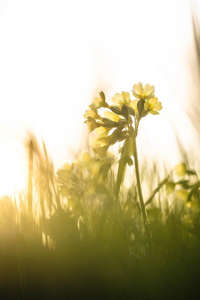 fauna-flora-160410-0013.jpg