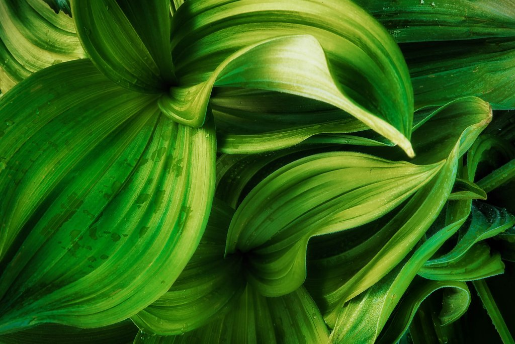 fauna-flora-160528-0015.jpg