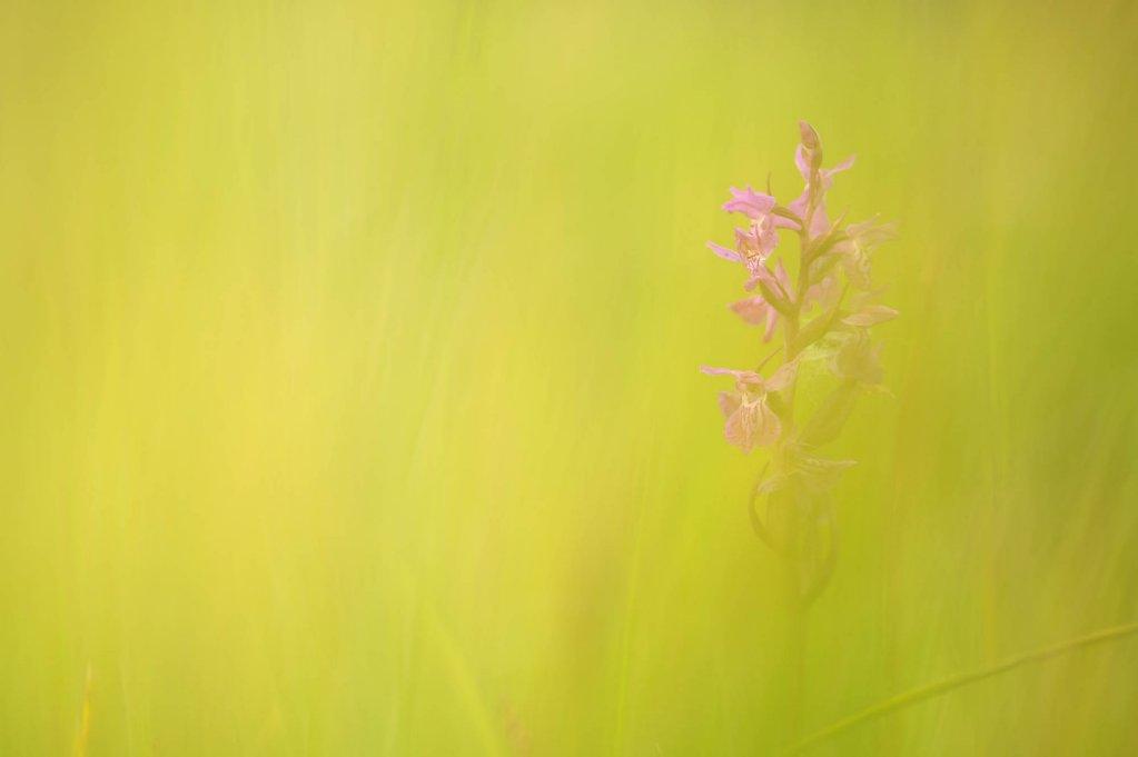 fauna-flora-160703-0017.jpg