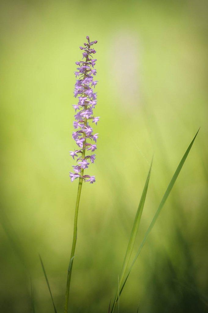 fauna-flora-160716-0022.jpg
