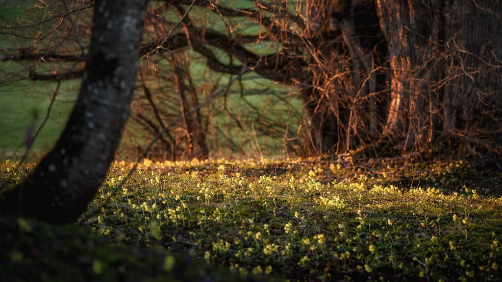 fauna-flora-170326-0025.jpg