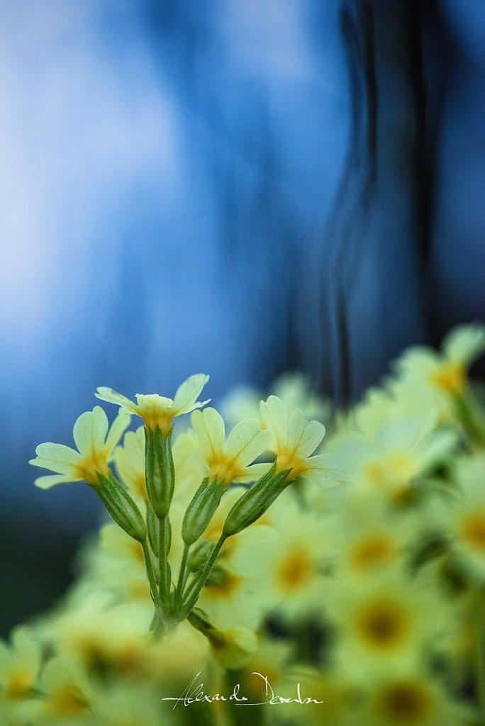 Frühlingsboten I