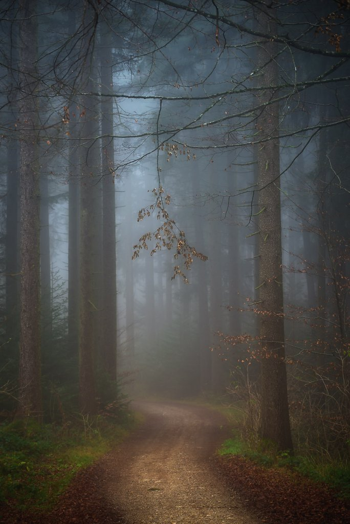 taubenberg-nebel-0063.jpg