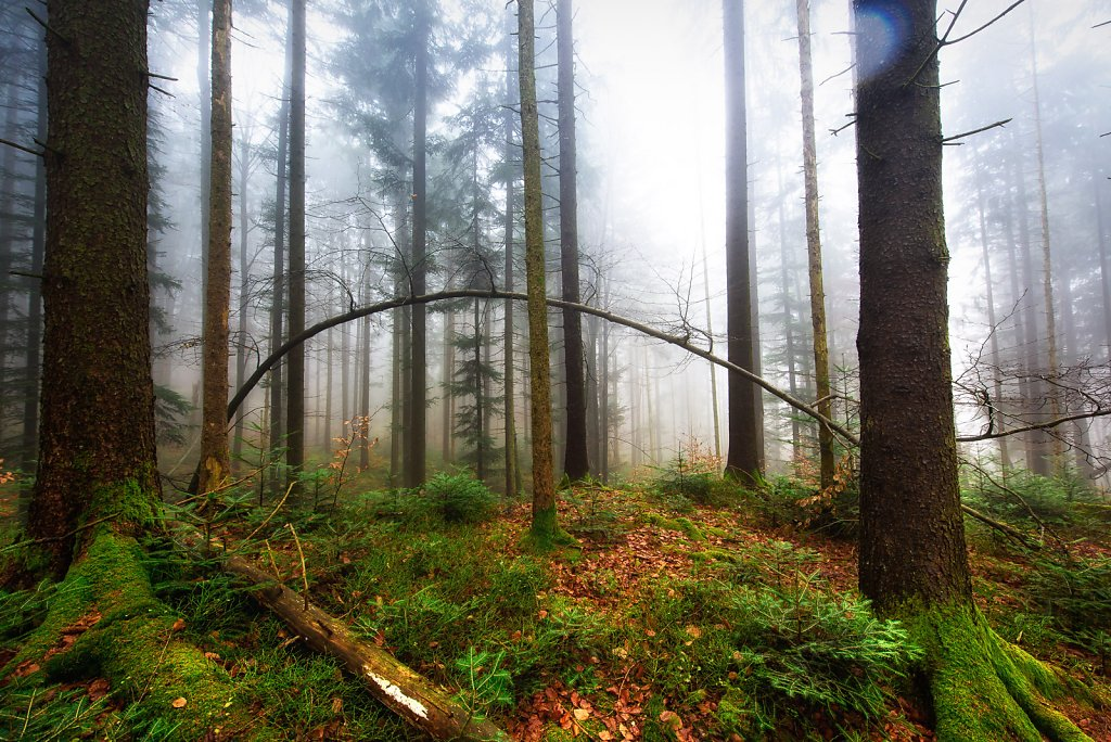 taubenberg-nebel-0041.jpg