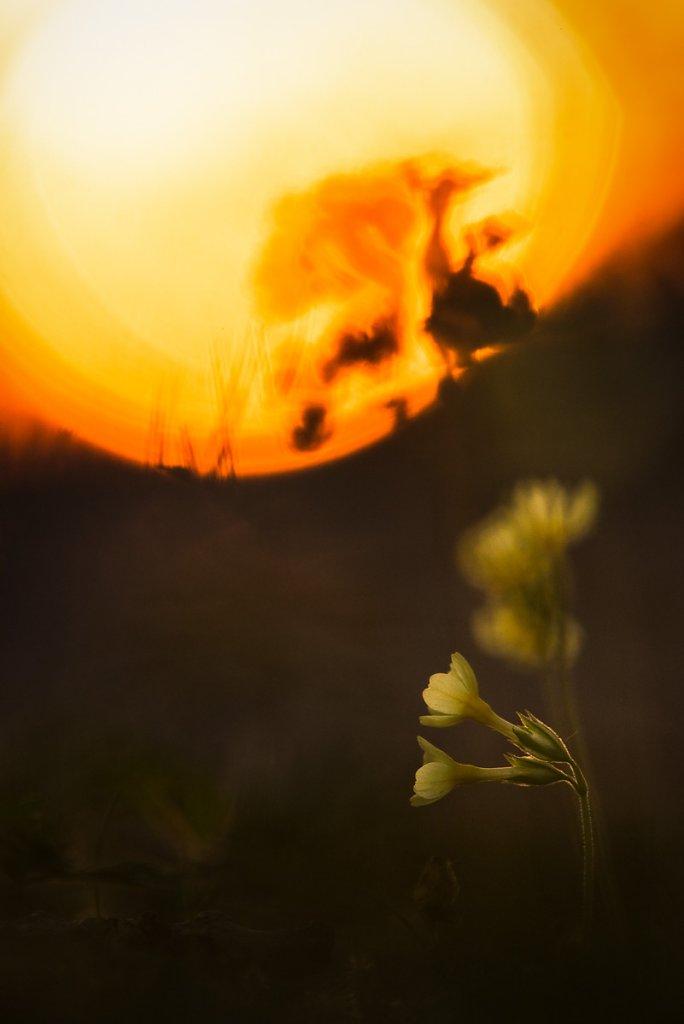 schluesselblumen-2.jpg